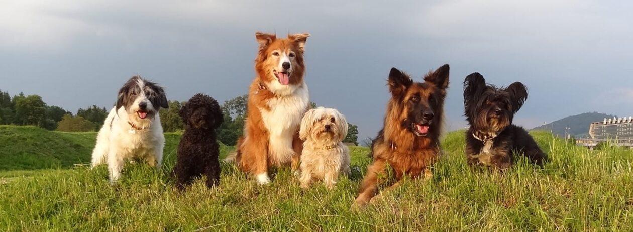 MyBestFriends – Hundeschule Bühler